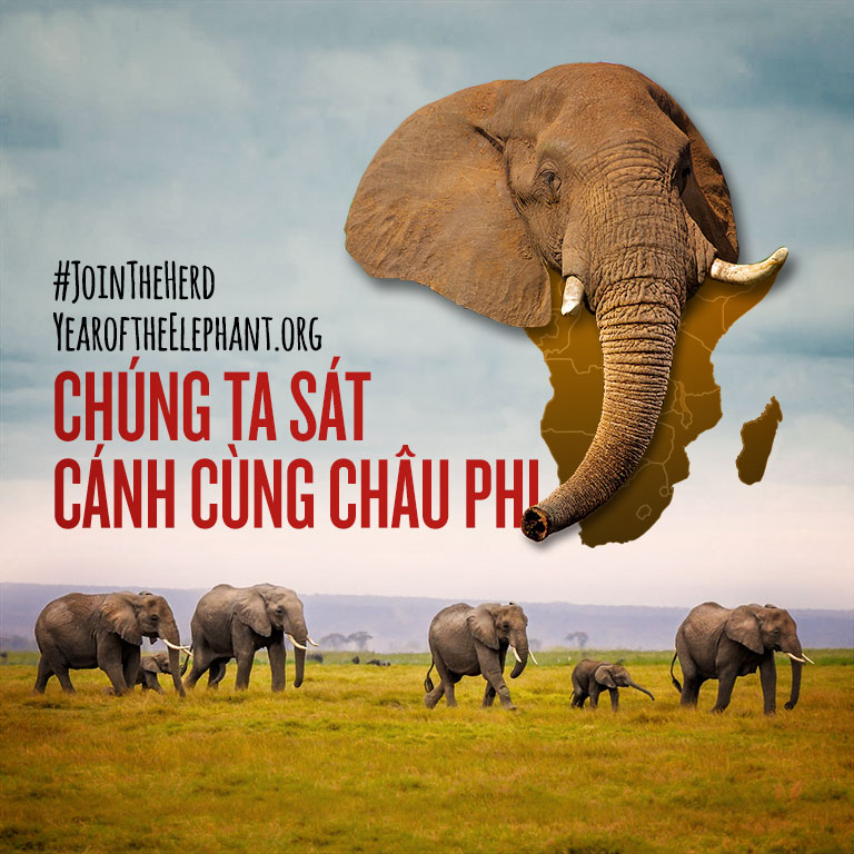 WildAid_Join_the_Herd_Vietnamese